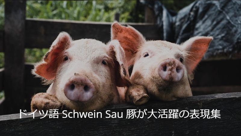 【ドイツ語レッスン】Schwein Sau 豚が大活躍の表現大特集【英語で理解】